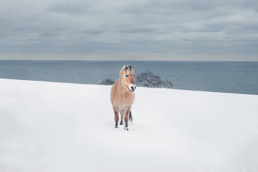 Wild-Horses-Photography11-900x600
