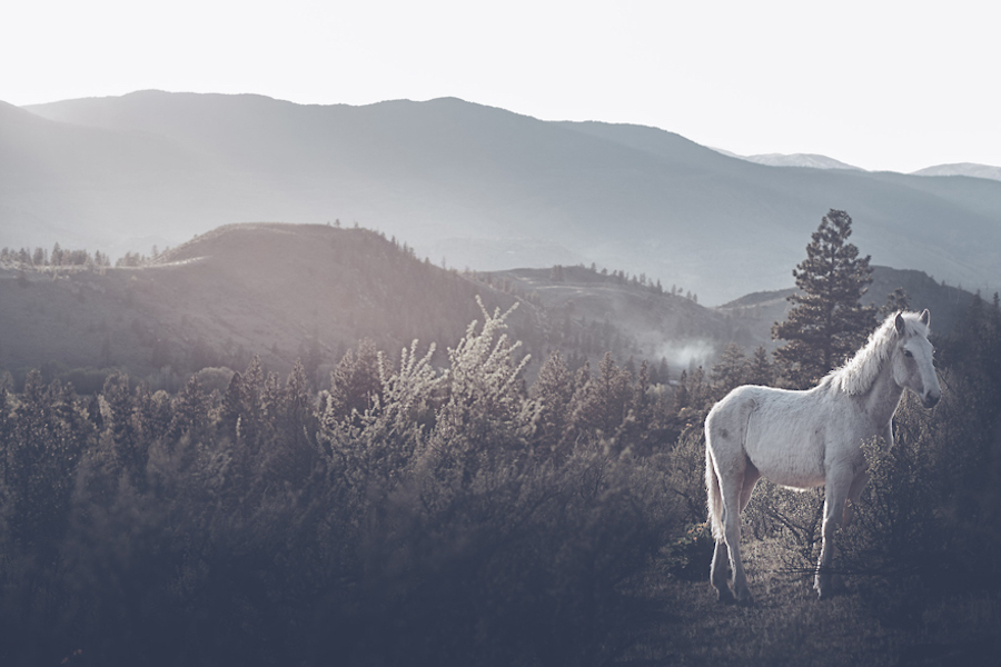 Wild-Horses-Photography2