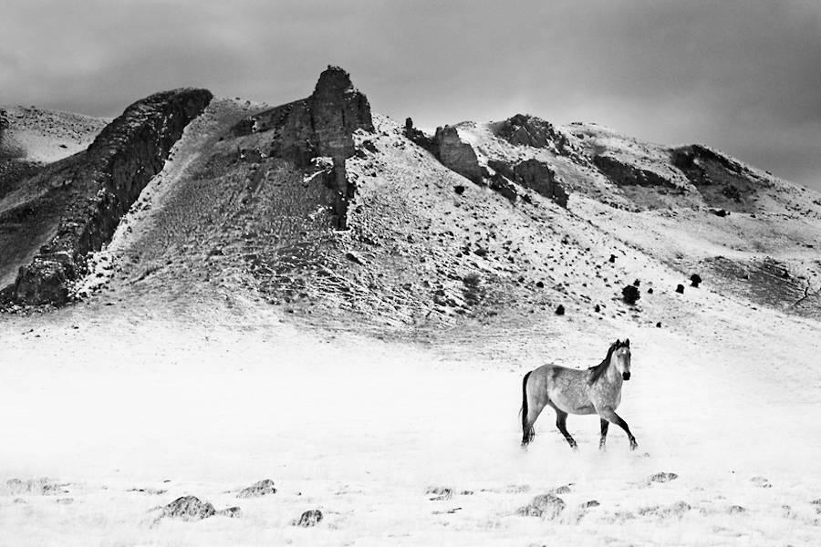 Wild-Horses-Photography5-900x600