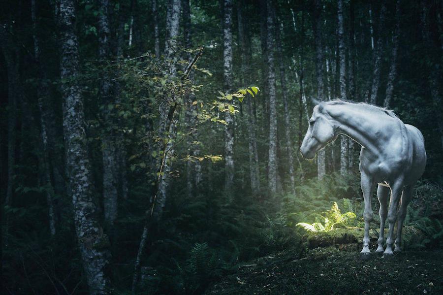 Wild-Horses-Photography8-900x599