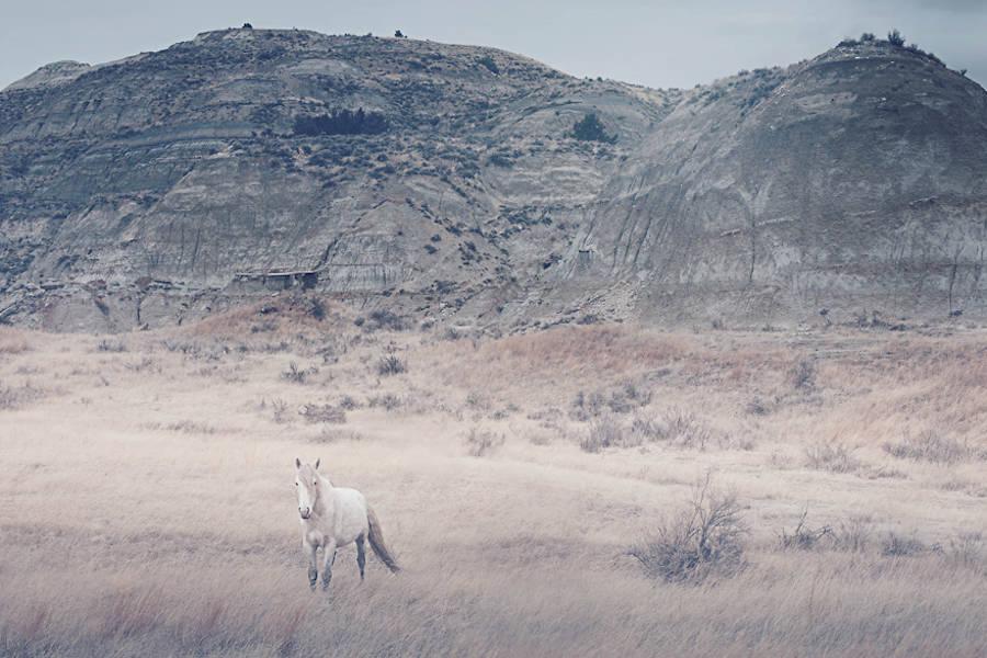 Wild-Horses-Photography9-900x600