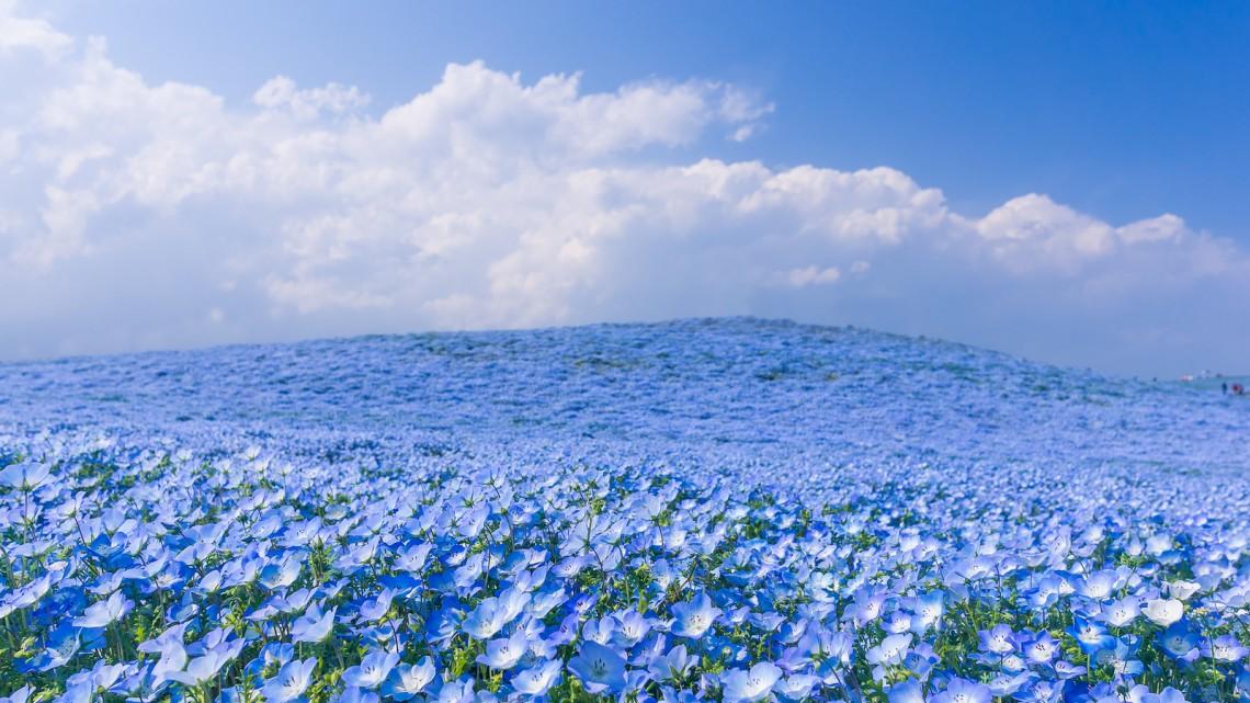 flowers01-1140x641